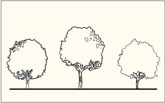 בלוקים - קונטור של עצים לשרטוט חזיתות