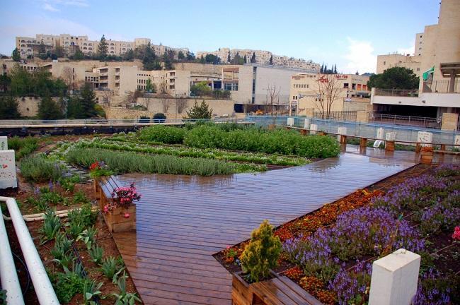 גג ירוק ללא השקיה: האם ייתכן בישראל?